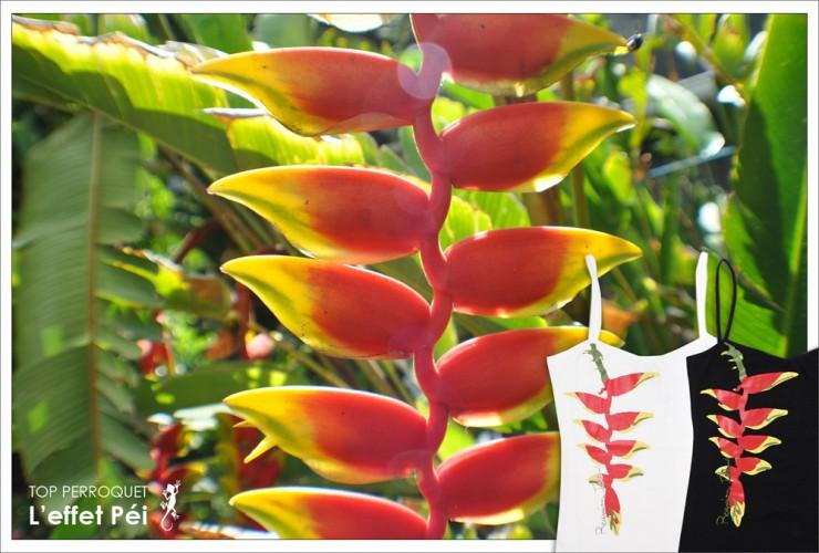 Top Perroquet L'effet Péi île de la Réunion